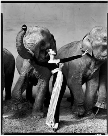 Dovima aux éléphants - Richard Avedon 1955 au Cirque d'Hiver