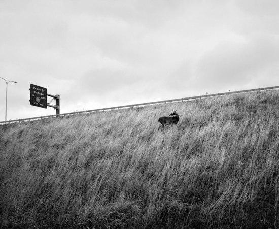 Deer on highway embankment